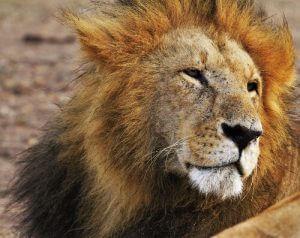 Fazer o imposto de renda para MEI e ME não é complicado, cuidado com o Leão